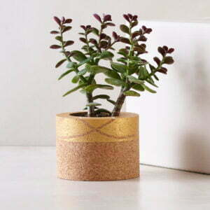 Aster Gold Cork Planter