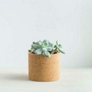 mind the cork echo with succulent