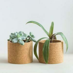 mind the cork echo with succulent and plant