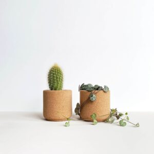 mind the cork bloem planter fine grain with cactus and string of hearts